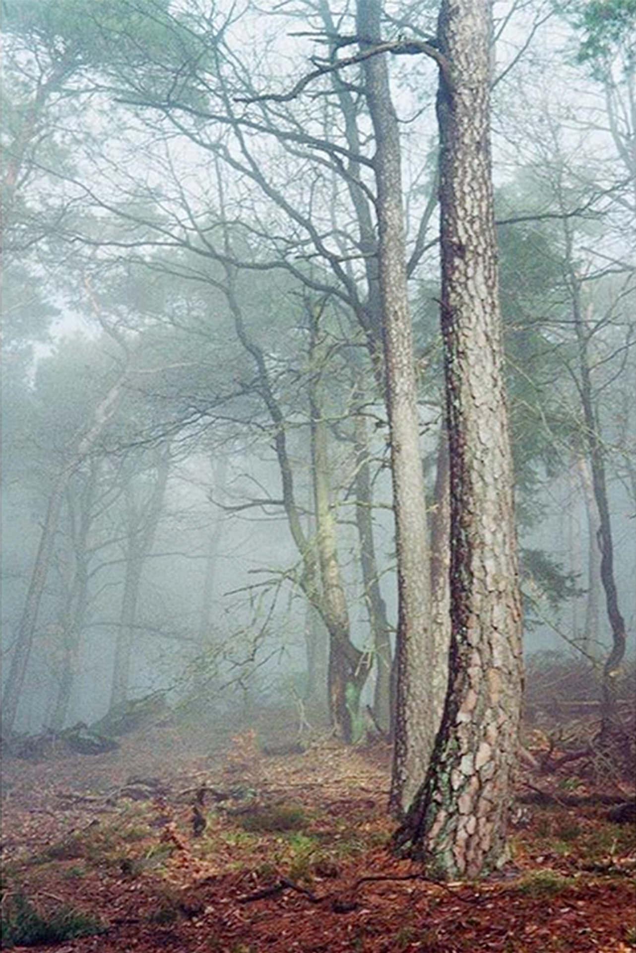 Frey und Meute - Pfalzkalender - wald 1